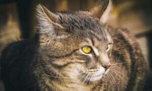 Naukowcy prawdopodobnie są w stanie uratować kota Schrödingera