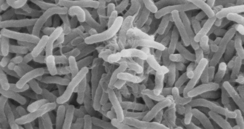 cholera, bakteria cholera, gen bakterii cholery, kod genetyczny bakterii cholery, Vibrio cholerae, kod genetyczny Vibrio cholerae