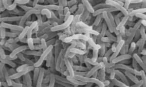 Naukowcy odwzorowali kod genetyczny najstarszego szczepu cholery
