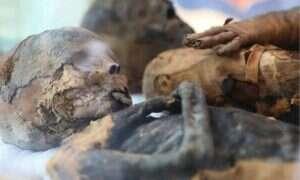 Dziesiątki zmumifikowanych myszy i ptaków znaleziono w Egipcie