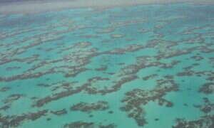 Zmiany klimatu potężnie osłabiły Wielką rafę koralową