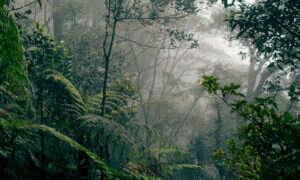 Najwyższe na świecie drzewo jest dłuższe niż boisko do piłki nożnej