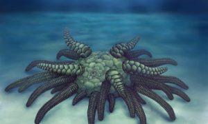 """W Anglii odkryto skamieniałe szczątki """"Cthulhu"""""""