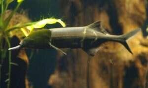 Ryba elektryczna pomogła w stworzeniu kamery