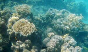 Pojawiła się nowa metoda obserwacji raf koralowych