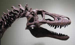 Ktoś sprzedaje szkielet młodego tyranozaura na eBayu