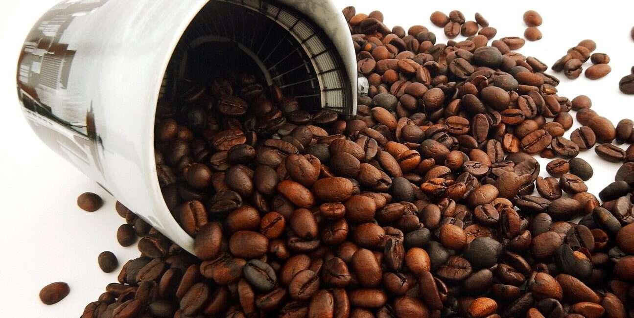 bezkofeinowa kawa, powstawanie bezkofeinowej kawy, badania nad kawą