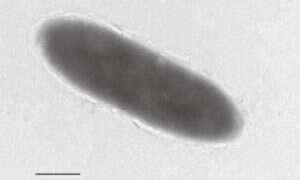 Naukowcy odkryli bakterie żywiące się ropą
