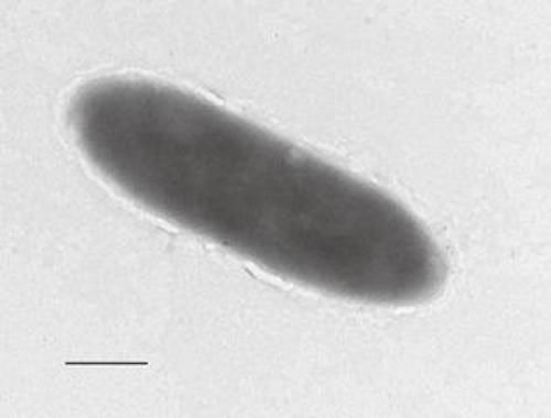 Bakterie, ropa Bakterie, węglowodory Bakterie, rów mariański Bakterie,