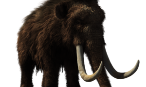 Neandertalczycy i mamuty mają wspólne cechy genetyczne