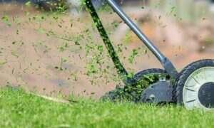 Dlaczego świeżo skoszony trawnik pachnie aż tak dobrze?