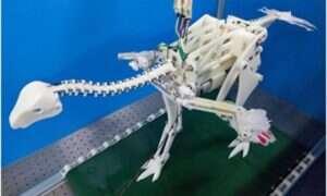 Robotyczny dinozaur pomaga rozwiązać tajemnice ewolucji zdolności latania