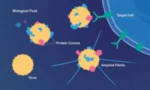 Wirus opryszczki może przyspieszać Alzheimera
