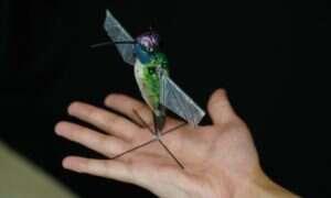 Ten podobny do koliberka dron rzeczywiście ma z nim wiele wspólnego
