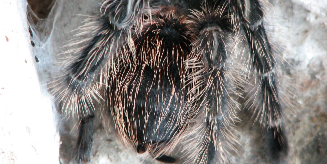 Opracowano nowe czujniki inspirowane pająkami