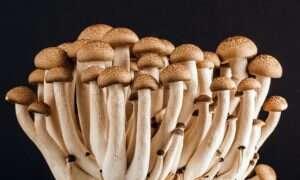Skamieniałe grzyby mogą zmienić nasz pogląd na to, jak życie przeszło z wody na ląd