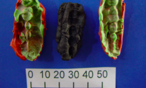 Dzięki 10 000-letniej gumie do żucia lepiej poznajemy historię ludzkości