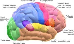 Nauka bada jak modyfikować nasze wspomnienia