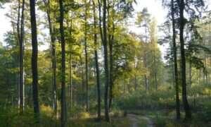 Lasy mogą przyspieszać zmiany klimatu