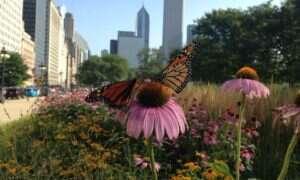 Miasta są kluczowe do ratowania monarchów