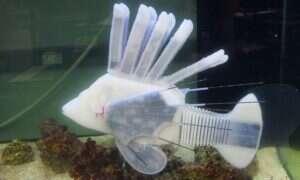 Ta robotyczna ryba z krwioobiegiem przełamuje wiele barier