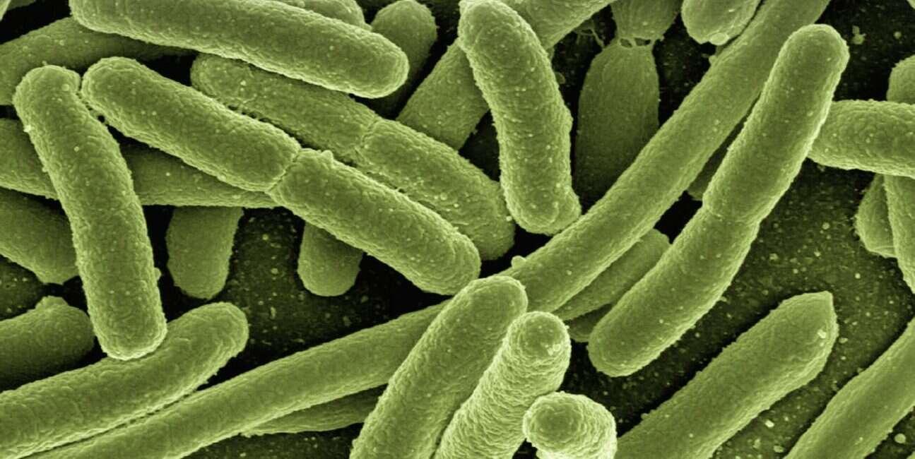 bakterie, jelita bakterie, mikrobiom, leki bakterie, leki bakterie w jelitach, bakterie a leki, mikrobiom leki