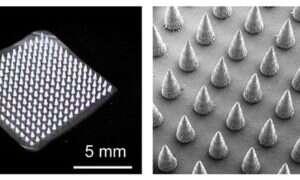Plaster z mikroigłami umożliwia szybkie wykrycie chorób roślin
