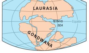 Tektonika płyt wpłynęła na klimat i ewolucję życia