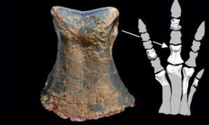 Poszukiwacz opali odkrył nowy gatunek dinozaura