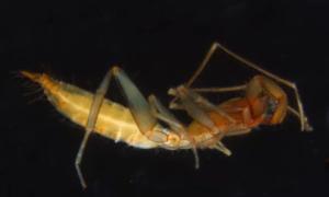W jaki sposób doszło do ewolucji tych podziemnych zwierząt?