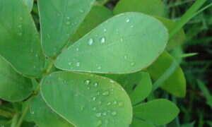 Rośliny wymierają około 500 razy szybciej niż powinny