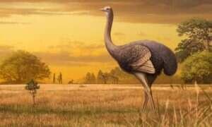 Prehistoryczny ptak miał 3,5 m wysokości i ważył pół tony