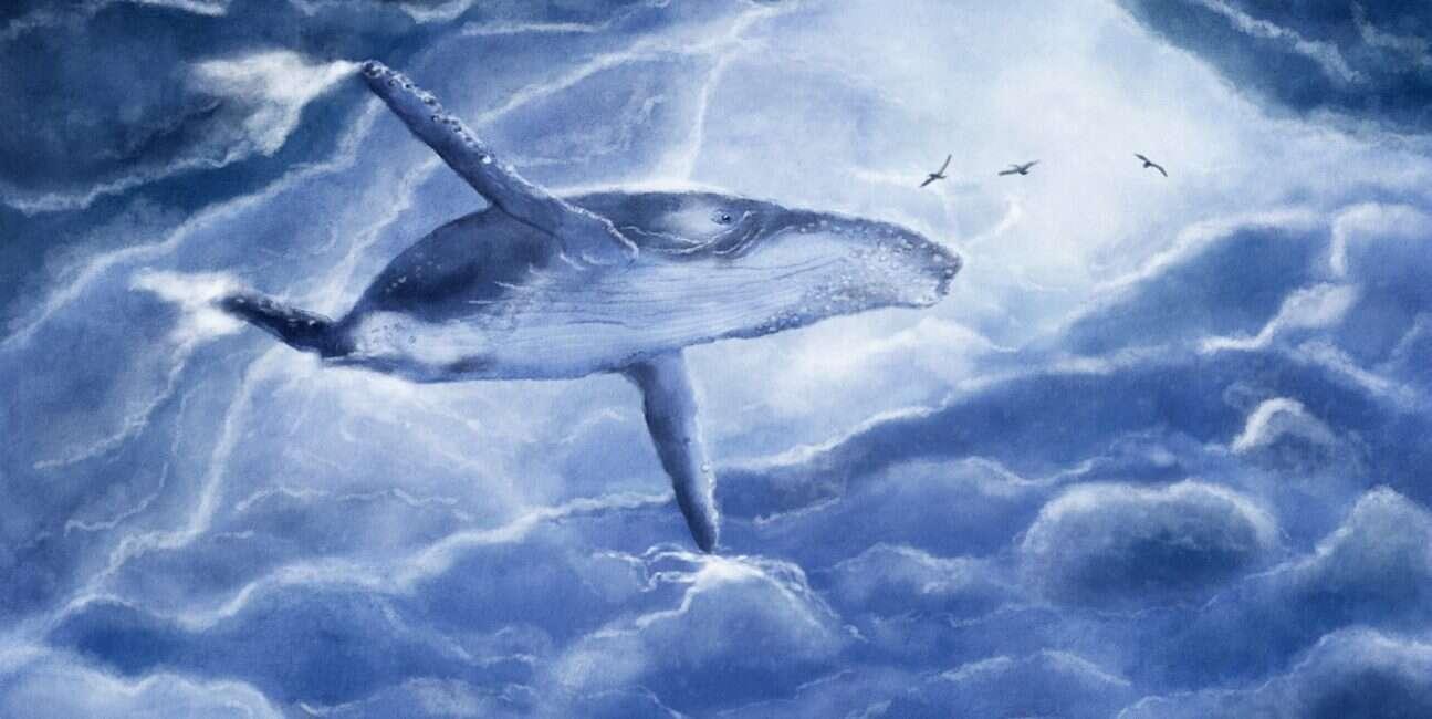pływacze szare, śmierć pływacze szare, wieloryby, śmierć wielorybów, tajemnicza śmierć pływacze szare, tajemnicza śmierć wielorybów