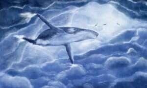 Ponad 70 pływaczy szarych zmarło w ciągu 6 miesięcy – naukowcy nie wiedza dlaczego