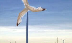 Mewy kluczem do wzmocnienia mniejszych elektrowni wiatrowych