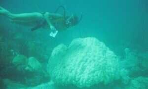 Trzydzieści lat danych ujawnia co zabija rafy koralowe