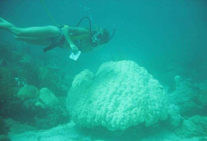 rafy koralowe, umieranie rafy koralowe, zabijanie rafy koralowe, azot rafy koralowe, ocieplenie rafy koralowe