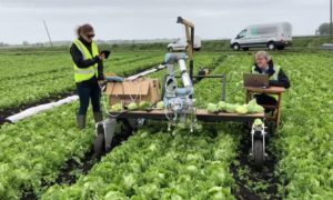 Ten zbierający sałatę robot zawdzięcza precyzję maszynowemu uczeniu