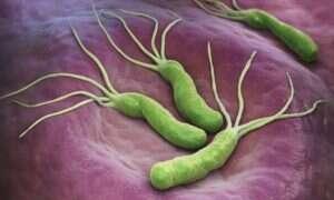 Odkryto nowy mechanizm obronny bakterii