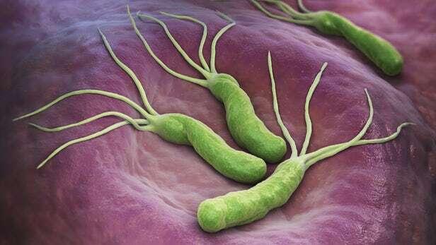 bakterie, leczenie bakterii, bakterie gram ujemne, mechanizm obrony bakterii, terapia bakterie, leki baketrie