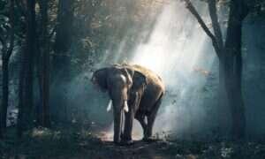 Wymieranie słoni podnosi poziom CO2 w atmosferze