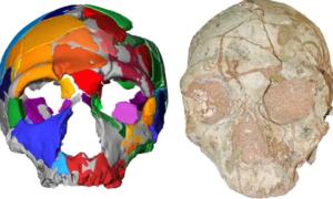 Analiza ludzkich czaszek wskazuje, że ludzie wcześniej opuścili Afrykę