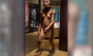 Dlaczego szympansy nie wyewoluowały tak samo jak ludzie?