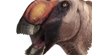 Oto prawdopodobnie najdziwniejszy dinozaur jakiego odkryto