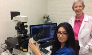 E-papierosy uszkadzają komórki macierzyste mózgu
