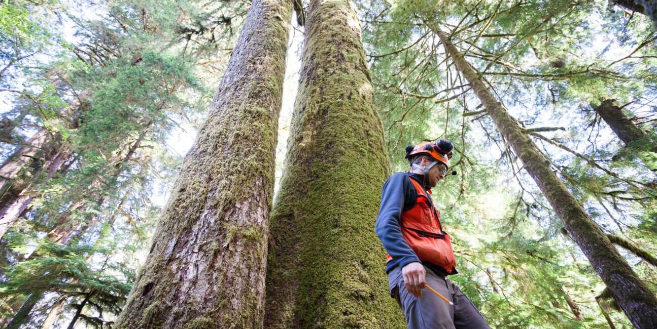drzewa, geny drzewa, genetyka drzewa, mutacje drzewa, genom drzewa, DNA drzewa,