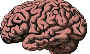 To badanie może pomóc w koncentracji osób psychicznie chorych