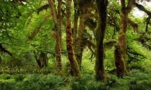 Wylesianie Amazonii jest coraz mocniejsze