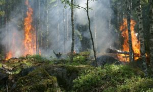 Pożary mogą łagodzić zmiany klimatu poprzez chwytanie dwutlenku węgla