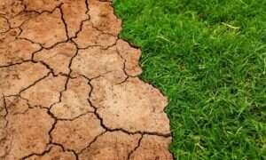 Jaka będzie rola drzew w walce ze zmianami klimatu?